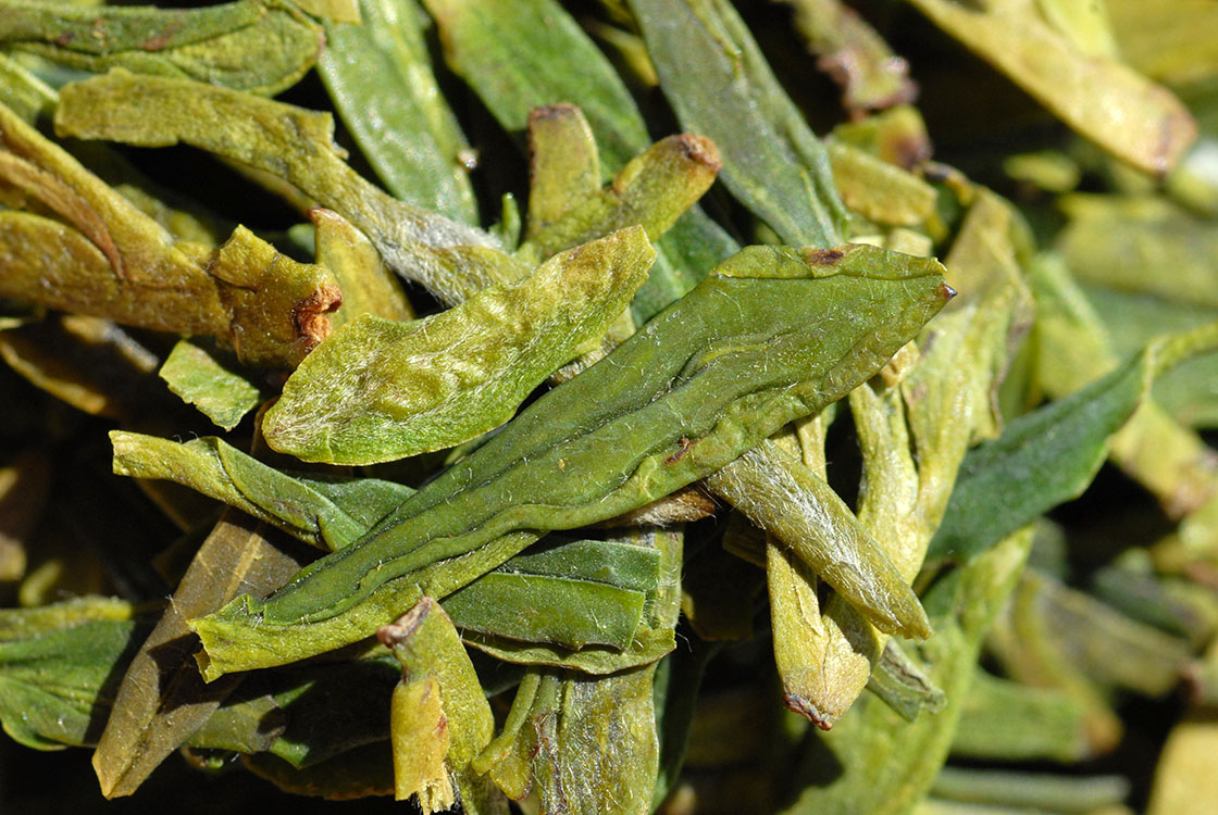 longjing dafo early spring premium chinese greentea